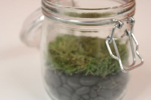 Decorate your terrarium