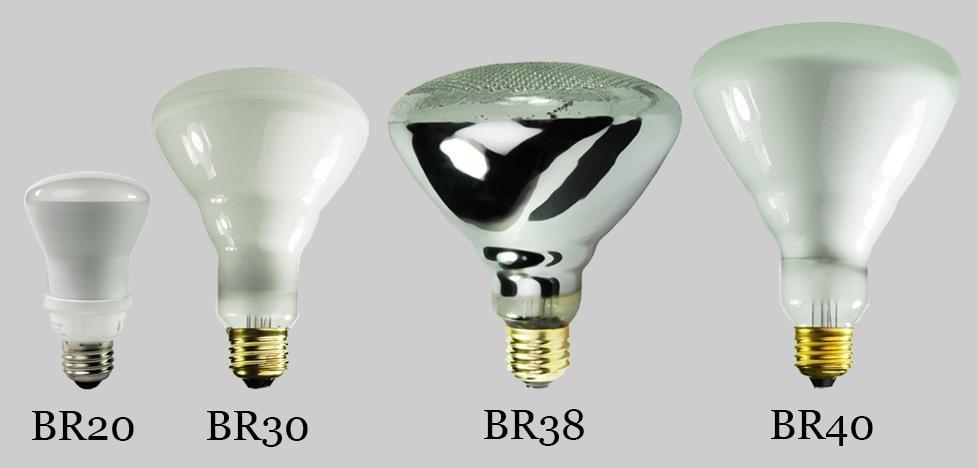 BR/R bulb size and shape comparison