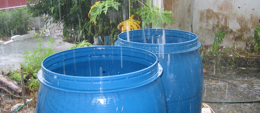 harvest rain water with a 50 gallon drum