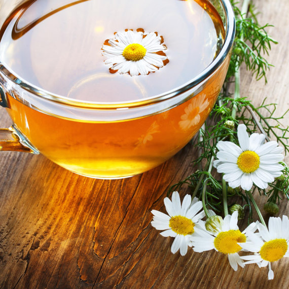 watering plants with chamomile tea