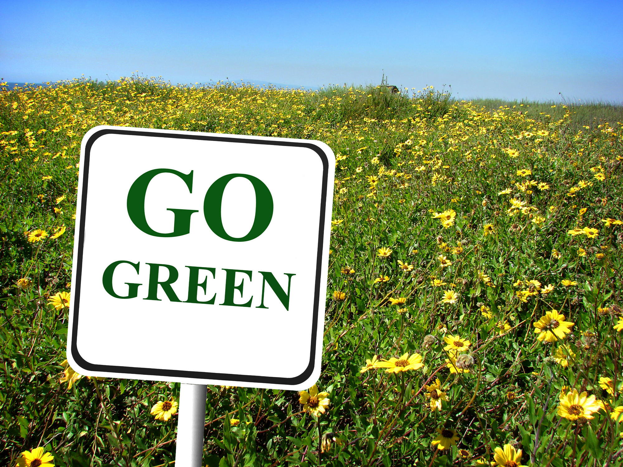 tips to going green