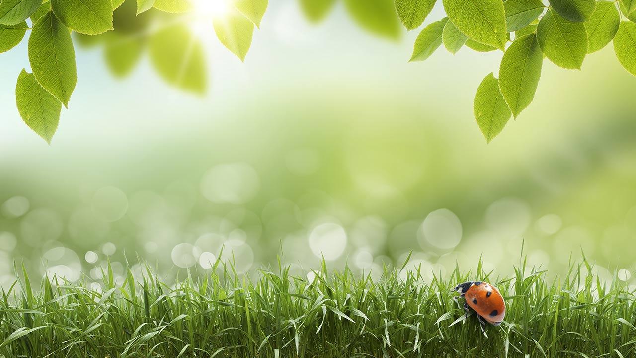 live a greener lifestyle