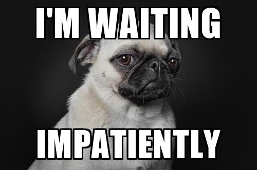 Dog waiting impatiently