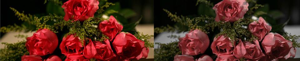 CRI rating of roses