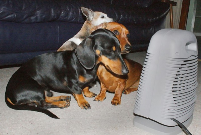 Puppies in front of a heater